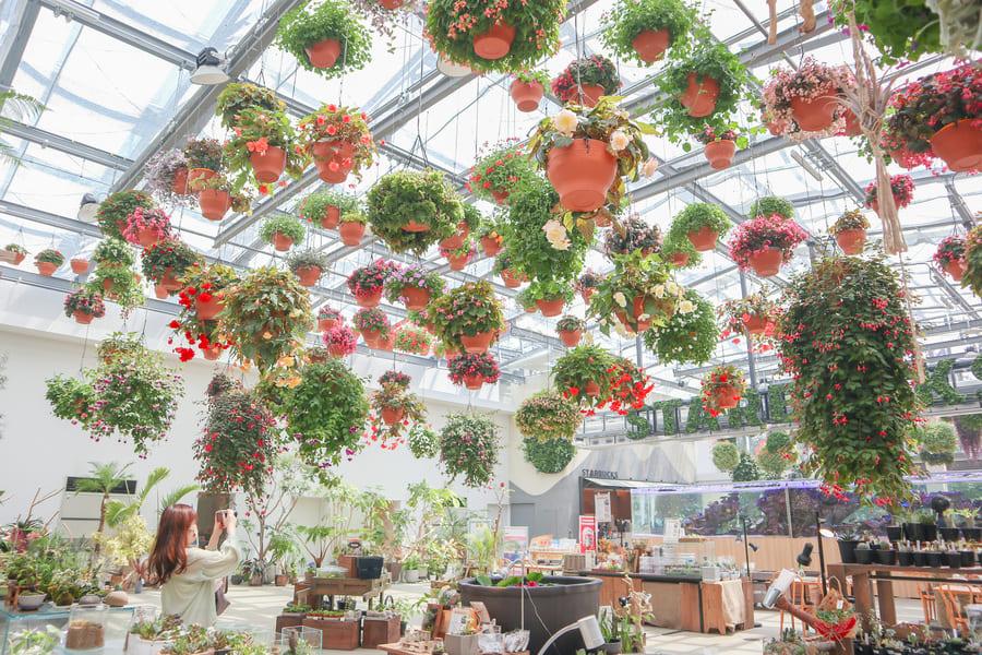 天井いっぱいの植物