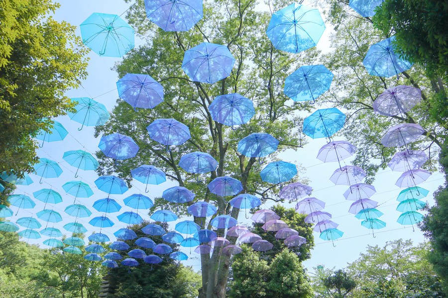 たくさんのブルーやパープルの傘